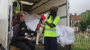 1000 duvets donated to Dogs Trust